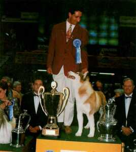 Best in Show Siberian Husky