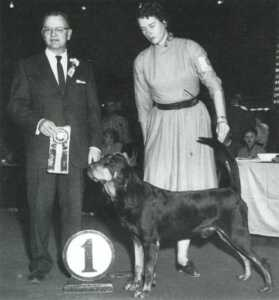 Coonhound Best in Show 1960