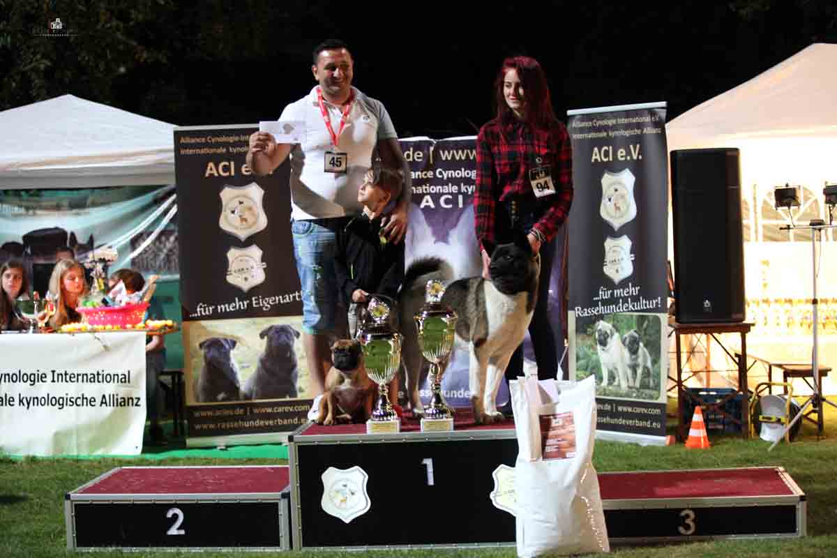 Best in Show Interkontinental Sieger Schau 2016