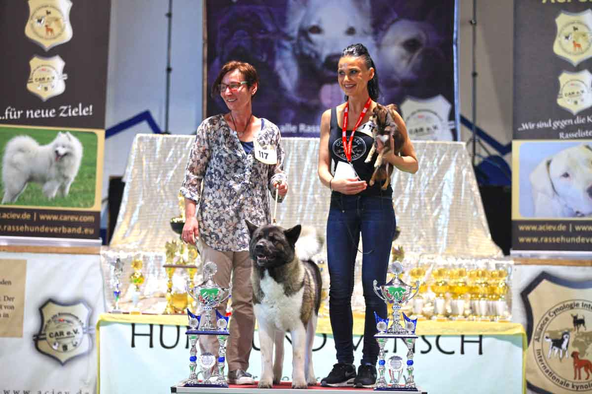 "BEST IN SHOW All Star Dog Show 2017 Grossrasse: Amerikanischer Akita ""Beauty from Moule's Garden"